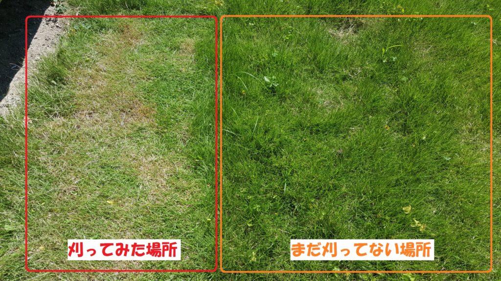 芝刈り前後比較