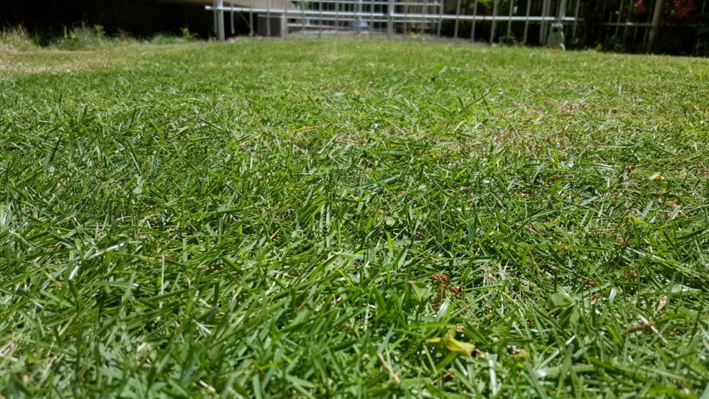 芝刈り後(地面スレスレ写真)