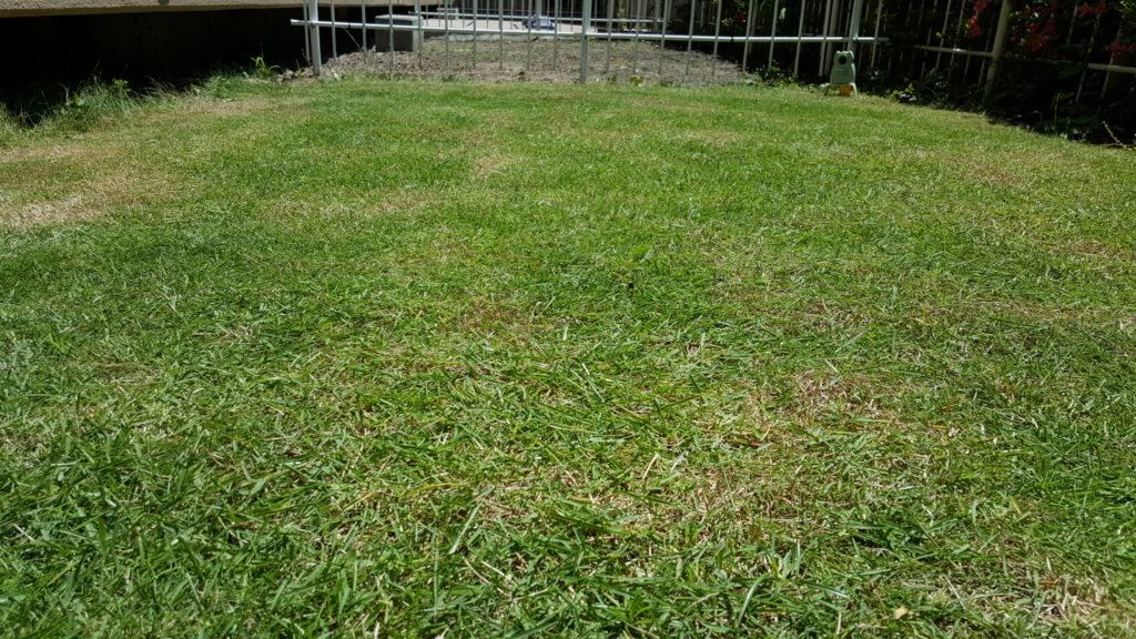 芝刈り後(茶色い部分)